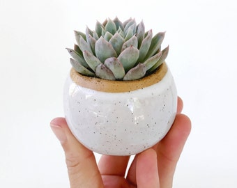 White Ceramic Planter / Small Pot for Succulents, Cactus or Air Plants / The Knoll Planter / READY TO SHIP