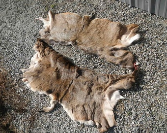 One Average Large Mule Deer Back Hide - Soft Tanned - Stock No. LMBH