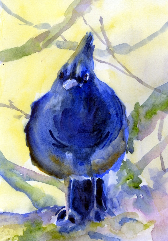 Steller's Jay 2 - signed print - Bonnie White - Pacific Northwest Birds - bird prints