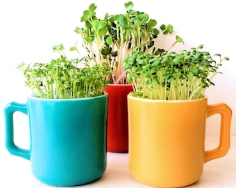 DIY Microgreens Garden Kit in Vintage Midcentury Child's Mug - Blue Yellow Orange - Complete Growing Kit Planter, Organic Seeds and Soil Mix