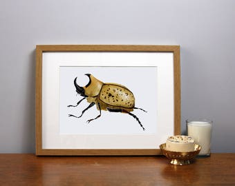 Insect Print A4, A3- Choice of 26 insects