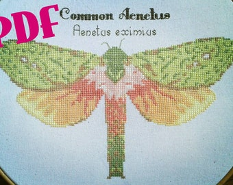 Moth cross stitch, moth cross stitch pattern, Moth, Moths, Bugs, Cross stitch pattern, Insect, PDF pattern, entomology, sciart,