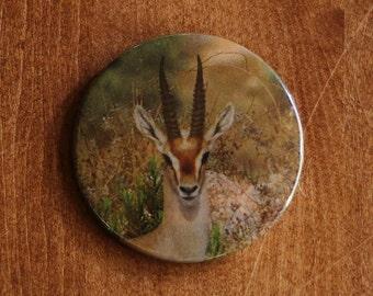 Gazelle Button