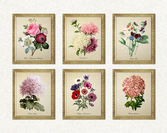 Botanical Print Set Chrysanthemums Poppies Sweet Pea Roses Flower Print Home Decor Vintage Chrysanthemum Print Reproduction GR001