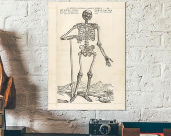 Vintage Anatomy of the human body - Educational poster with a standing human skeleton - Chart - book illustration repro - Andreas Vesalius