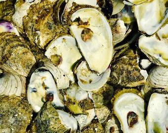 La Mer #6 (the Sea) Shells from the Martha's Vineyard Shore Photograph