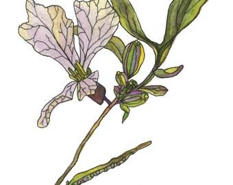 Greeting Card: Arugula in Bloom 5x7