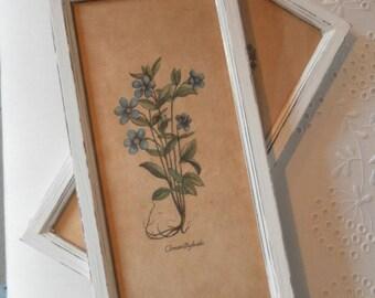 LCV botanical shabby frame