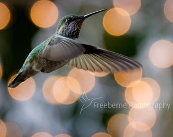 hummingbird photo card,  hummingbird card, hummingbird art, greeting card, hummingbird gift, mothers day card, bird greeting card, notecard