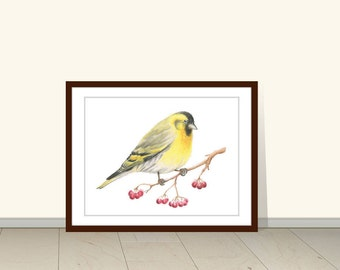 Carduelis Spinus, Bird Watercolor Print, Birds, Sparrow, Watercolor Print, Animal, Wall Art, Bird, Bird Print, Watercolor Illustration,
