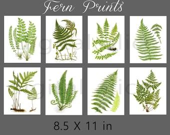 FERN PRINTS Botanical Art Set of 8- Digital Paper Pack -8 Vintage Printable Papers,Instant Download Digital Printable Paper crafts