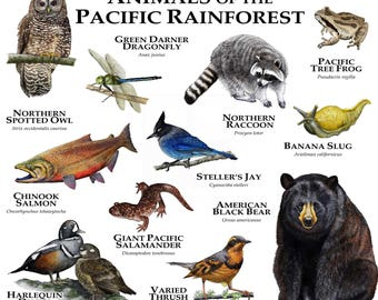 Animals of the Pacific Rainforest