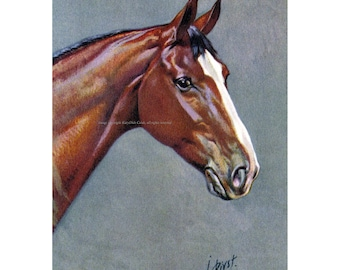 Horse Greeting Card - Warmblood Thoroughbred Equestrian - Rivst Image