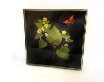 Real Hops Bine and Eastern Comma Butterfly Framed Botanical Shadowbox