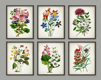 Flower Prints Set Of 6 #1 - Antique Flowers Botanical Poster - Flower Book Plate Illustration - Plant Biology - Flower Art Print - AB493