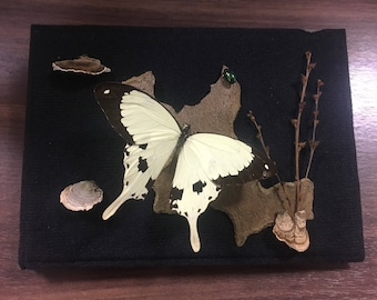 Yellow Butterfly shadow box (6x8)
