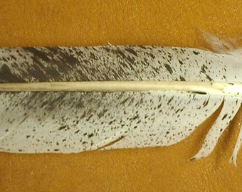 Imitation Golden Eagle Spotted Tail Feather