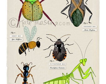 Collection of Bugs ART PRINT Australian Insects