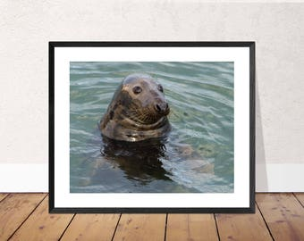 Grey Seal Photographic Print / Sealife Photograph / Wildlife Photography Image / Wall Art (various sizes and customisation available)