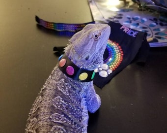 Rainbow Dot Collar