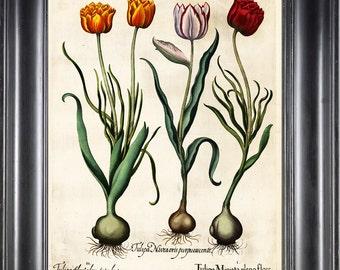 BOTANICAL PRINT Besler 8x10 Botanical Art Print 20 Beautiful Red Yellow Tulips Spring Garden Flowers Bulb Chart Antique Writing Home Decor