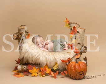 Digital Backdrop/prop newborn - Birch bed fall/autumn leaf with pumpkin