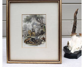 Antique Hand Coloured Print of Animals from the Natural World, Framed Art Print, Natural History