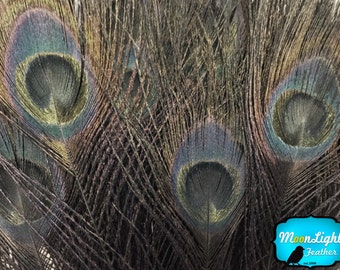 Peacock Feathers, 5 Pieces - BLACK Bleached and Dyed Tails Peacock Feathers: 262