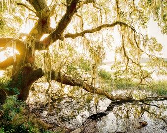 Fine Art Film Photography, Low Country Sunset, Charleston, SC
