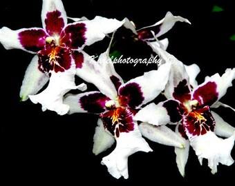 White Orchids Yellow Orange Burgundy Wall Art