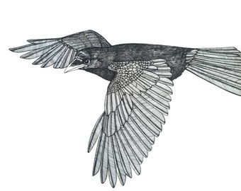 SALE crow in flight original artwork ink drawing on paper 9 x 12