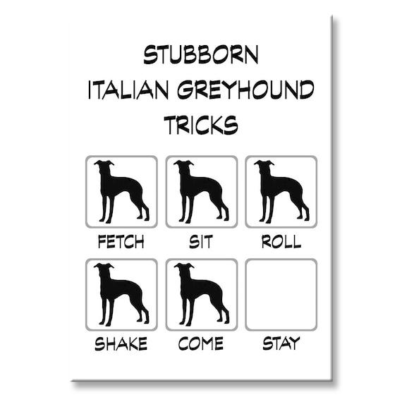 Italian Greyhound Stubborn Tricks Fridge Magnet