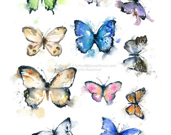 Butterfly Collection - Butterfly Specimens Illustration - Original watercolor illustration