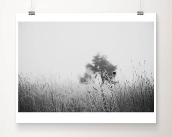 black and white photography tree photograph winter photograph minimalist decor tree print winter print nature photography