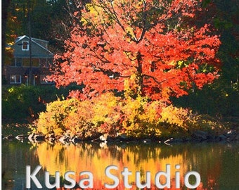 Downloadable Print Photography Abstract Fall Tree Leaves Pond