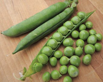 Green Arrow Heirloom English Shelling Pea Seeds Naturally Grown Open Pollinated Gardening
