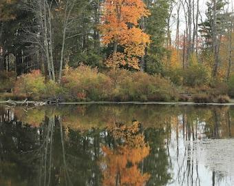 Autumn Tree Reflection