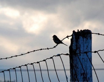 Bird Photography Gray and Blue Wall Decor Animal Photo Nature Decor Landscape Photo 5x5 inch Fine Art PhotographyPrint On The Fence