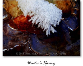 Winter's Spring - Fine Art Photography, Archival Photo Print, 5x7, 8x10, A6 Stationery
