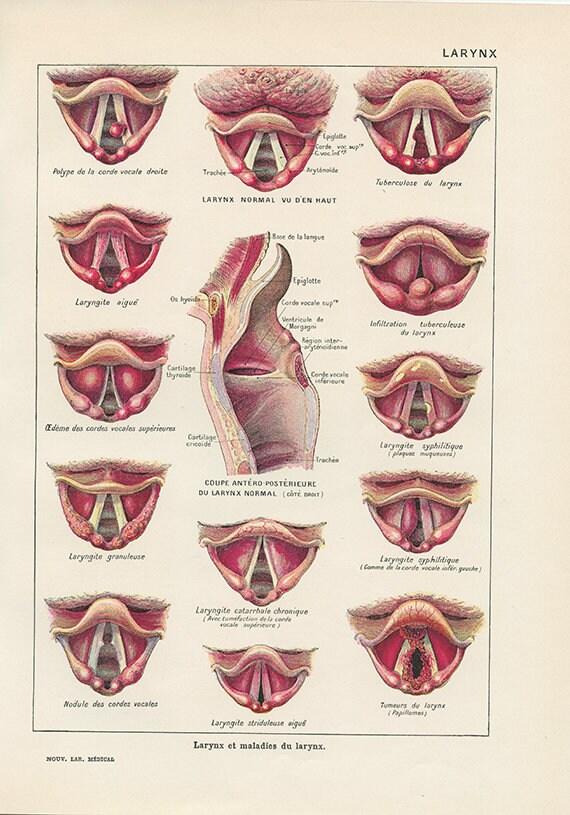 larynx anatomy - Ozil.almanoof.co