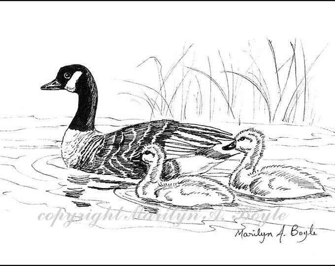 PRINT - CANADIAN GOOSE and family; pen and ink, 5 x 7 inches, lake, nature, birds, wings feathers, Canada, wildlife, wilderness, lake