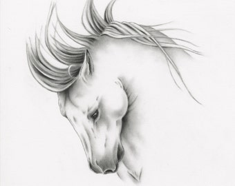 "ORIGINAL Charcoal Horse Drawing, 11""x14"" White Horse Art, Wild Horse Sketch, Equine, Horse Drawing, Charcoal Horse, Wild Horse Art"