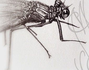 "Martinefa's original drawing presented in hand personalised frame - Dragonfly ""Libellule-2"""