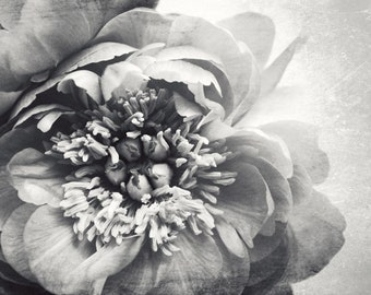 "Peony Print - Gray Floral Wall Art - Botanical Print - Peony Flower Print - Bedroom Wall Art Decor - Black and White Photography ""Peony 24"""