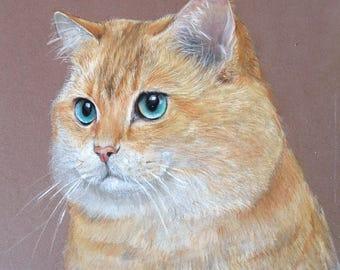 original Cat Portrait Pastel pet portrait Original Artwork Cat with amazing eyes