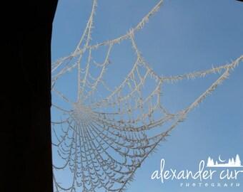 Silver Frost Spiderweb