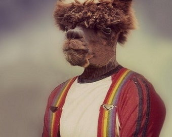NEW PORTRAIT*** Anthony Alpaca, Senior Portrait - 8 X 10 Art Print
