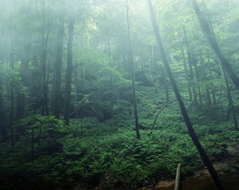 Morning Mist - Fine Art Photography, Wall Art Print, Landscape photography, fog, foggy, nature, trees, landscapes, moody, forest, trees
