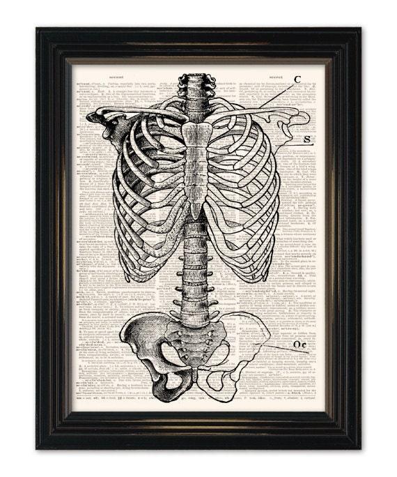 Anatomy dictionary art print. Sternum Medical Anatomy Diagram