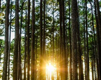 Scripture Wall Art // Canvas Gallery Wrap // Forest Sunset Photograph // Matthew 28:20